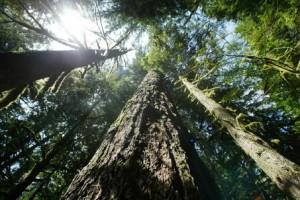 large_Wilderness