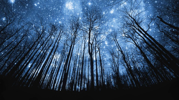 a-forest-of-stars-247689